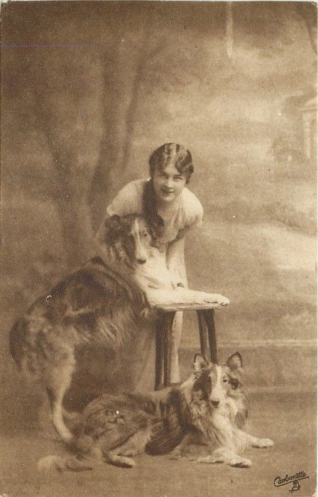 woman bends over two collie dogs