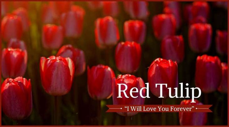 You Are Being Redirected Funeral Flowers Tulips Happy Flowers
