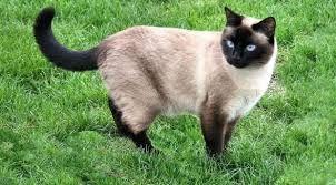 Billedresultat for katte