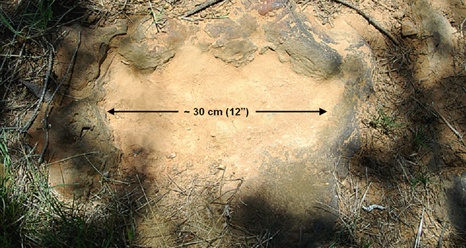 NASA - Dinosaur Footprints at NASA Goddard Take Another Step