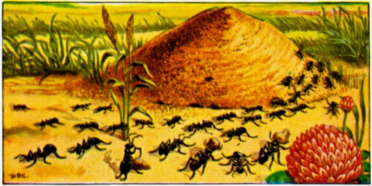 ants garden benefical insects ant colonies carpenter ant fire ant | The Old Farmer's Almanac