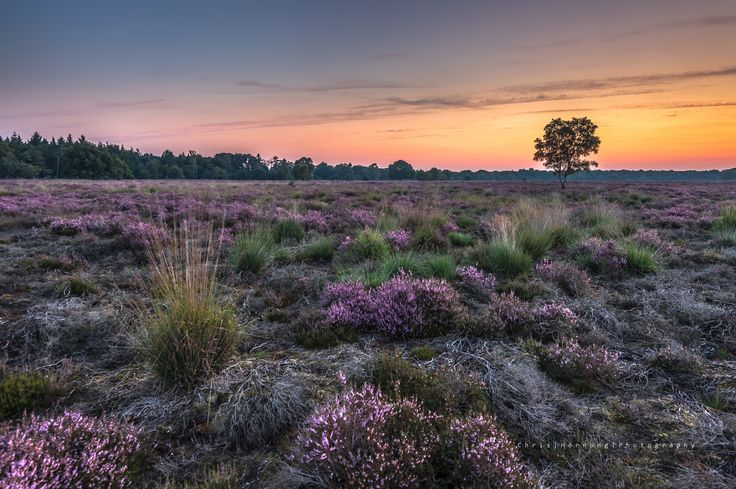 'before sunrise on the heathland' by Chris Hornung on 500px