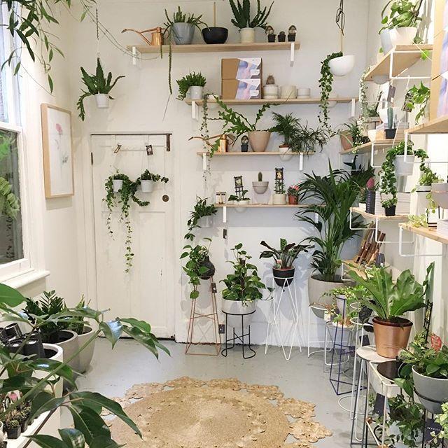 Ivy Muse Shop | open til 5 today #ivymuse #indoorjungle #prahran #botanicalwares