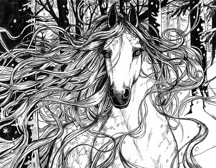 Book illustrations by Marta Leonhardt #horse #magic #ink #illustration