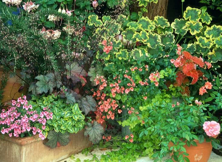 plante pour jardiniere exterieur plein soleil corbeilles duargent with plante pour jardiniere. Black Bedroom Furniture Sets. Home Design Ideas