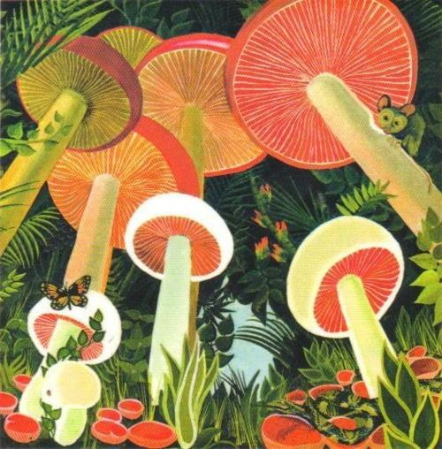 Mushrooms and a mouse. . .