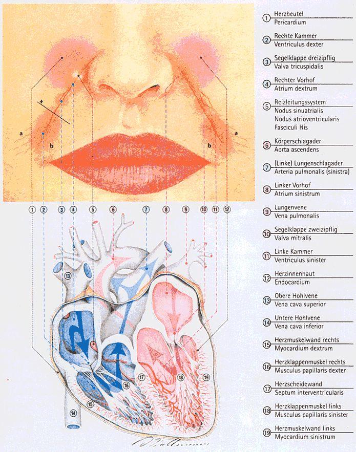 Pathophysiognomik nach Natale Ferronato pdf - Buscar con Google