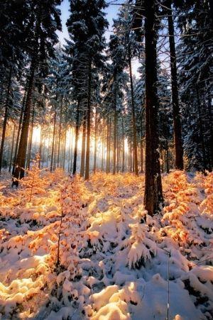 Sun-kissed Snow