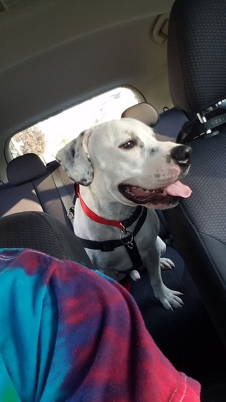 Me and my SO just adoped our first Dog! His name is Axel