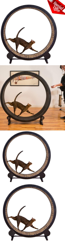 Animals Cats: Cat Exercise Wheel Indoor Catwheel Treadwheel Run Treadmill Play Toy Kitty New -> BUY IT NOW ONLY: $269.99 on eBay!