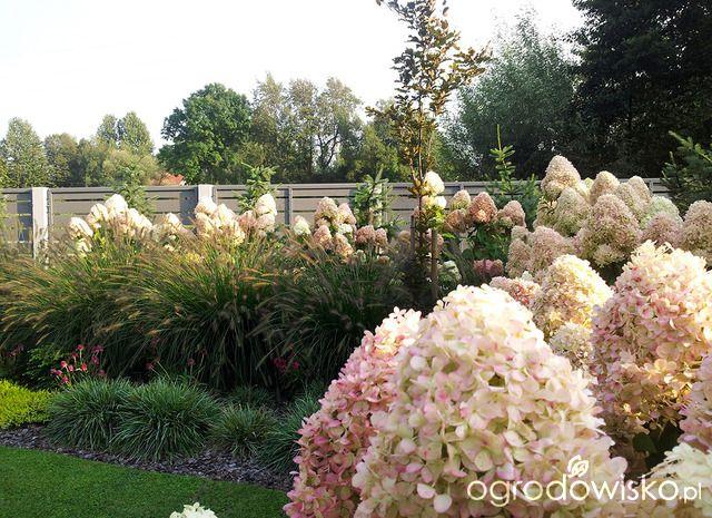 Moja codzienność - ogród Oli - strona 1579 - Forum ogrodnicze - Ogrodowisko