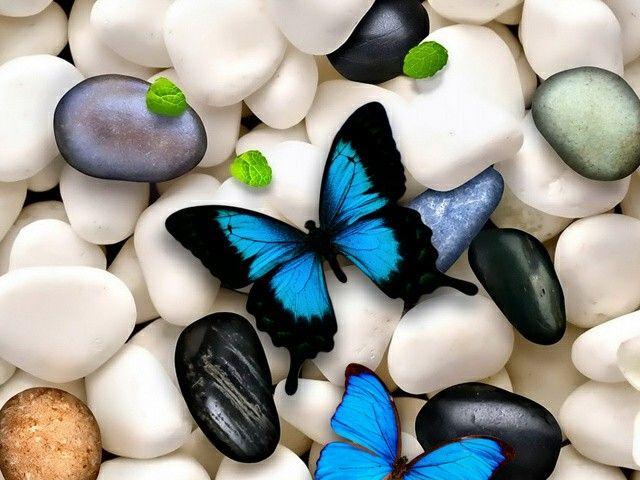 Fluturi pe pietre