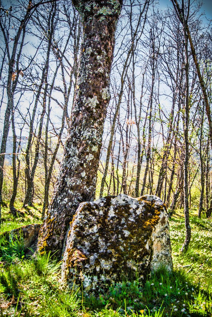TREE by LEVIATAN-666.deviantart.com on @DeviantArt
