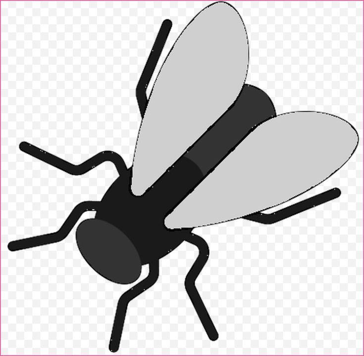 56 das beste von ausmalbilder insekten bilder