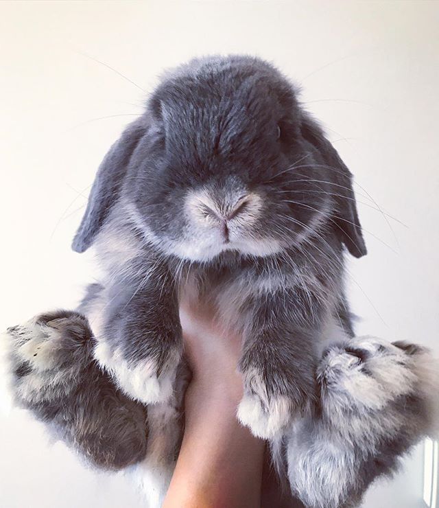 Wow! I hit 5000 followers today! Thanks for all the love from my bunny friends all over the world. I only started 4 months ago and can't believe how many friends I've made I such a short time!! Lots of love from Australia! ❤