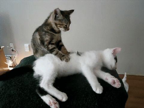 Cat massage #cats #massage