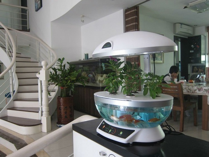 Hydroponic fish tank fishys pinterest for Hydroponics with fish
