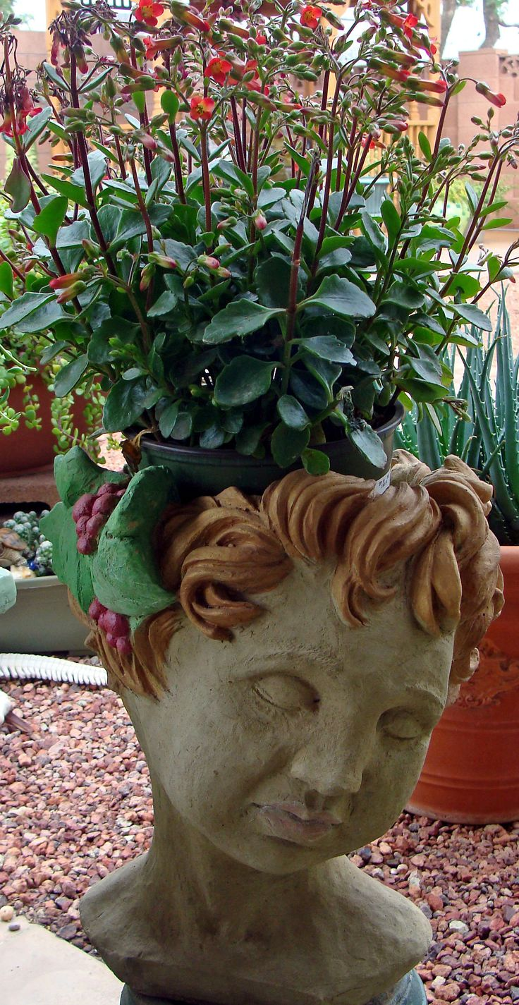 Cherub with kalenchoes head planters pinterest cherub - Medusa head planter ...