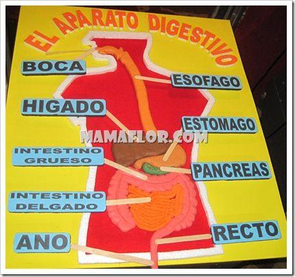 Resultado de imagen de e. infantil aparato digestivo