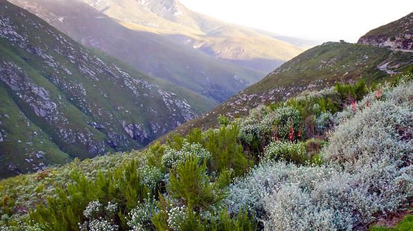 Take a road trip through the rugged mountains of South Africa's Montagu Pass.