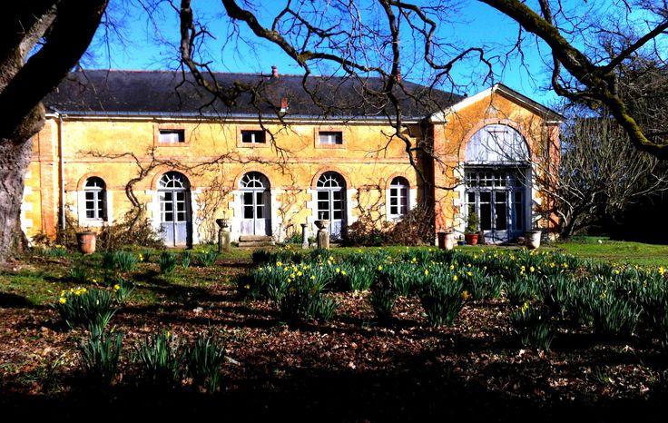 Le #cottage de l'Orangerie au #chateau de #chambiers, avec en premier plan des #jonquilles fleuries!  #printemps #anjou