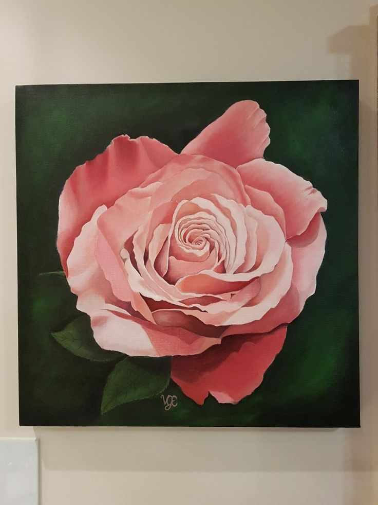 Peach rose. Acrylic on canvas. 50cm x 50cm. Painting by Vanessa Edwards.