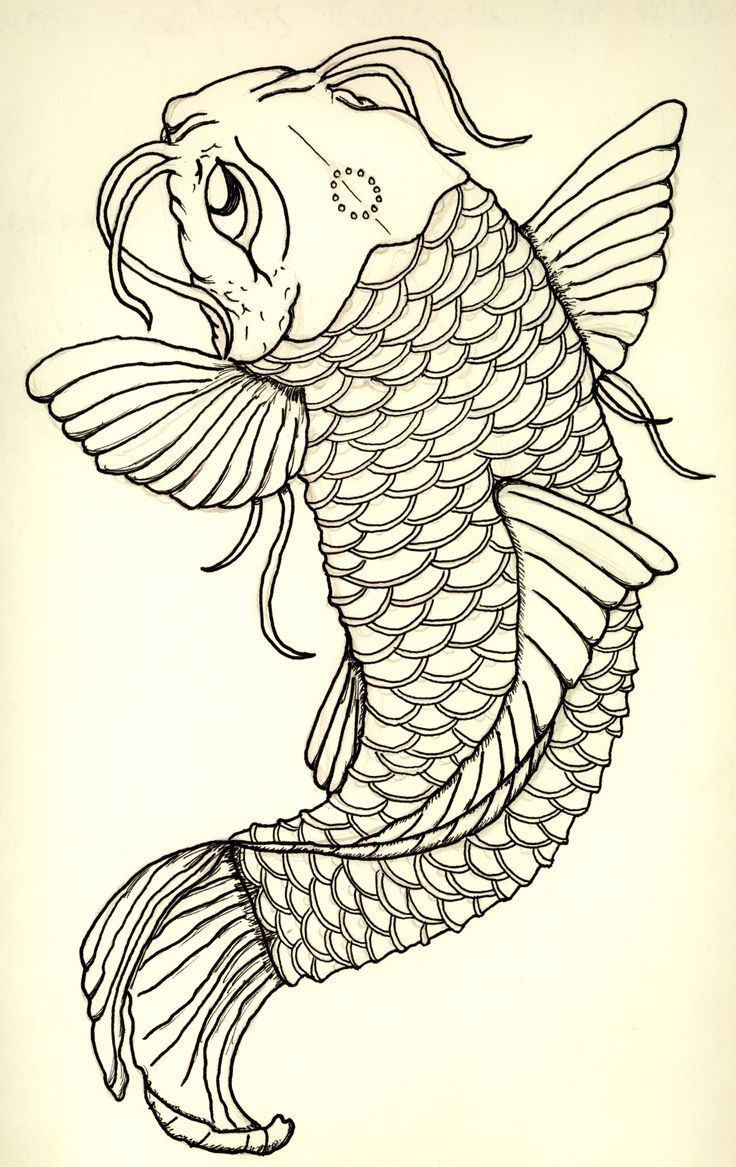 120 best images about koi fish tattoo designs on pinterest for Koi fish sketch