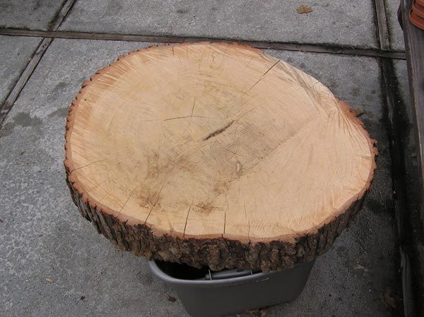 Finishing raw bark | Fine Woodworking Knots