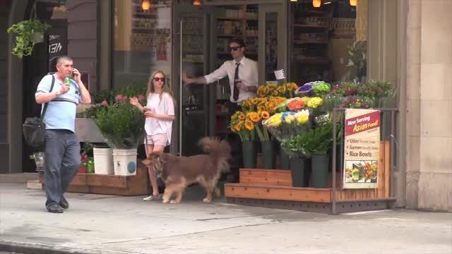 Amanda Seyfried desecha su traje de alfombra roja para sacar a caminar a su perro