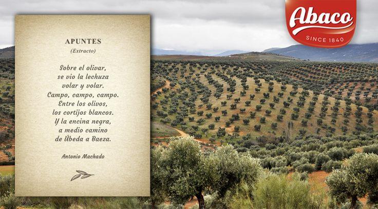 El fantástico #poeta español #AntonioMachado viajo por los #camposespañoles y dedicó muchos versos a los #olivares