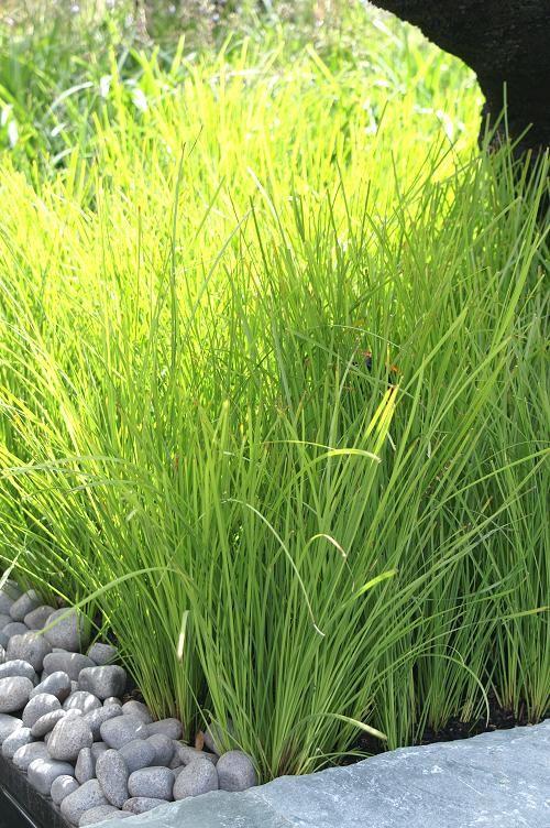 australian ornamental grasses