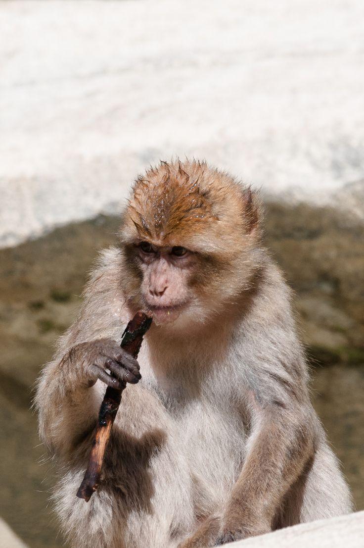 Fumeur de savane