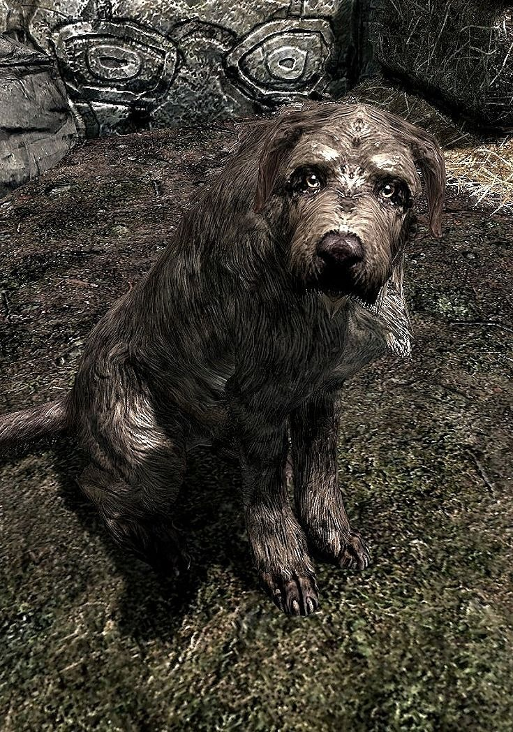 "This Story About Adopting A Dog In ""Skyrim"" Is hilarious"