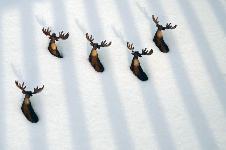 Stay in your own lane! Photo by Patricia Przybylinski — National Geographic Your Shot