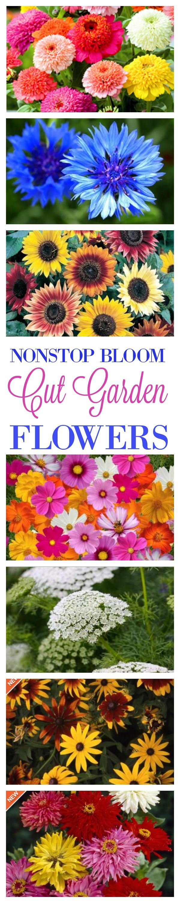 The Flower Seeds You'll Need To Buy For A Cut Flower Garden That Has Magnificent, Low Maintenance Blooms All Season Long