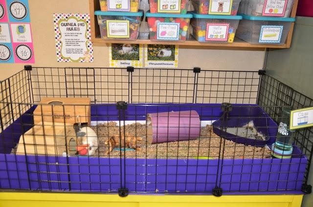 Classroom Pet Ideas ~ Best ideas about classroom pets on pinterest ks