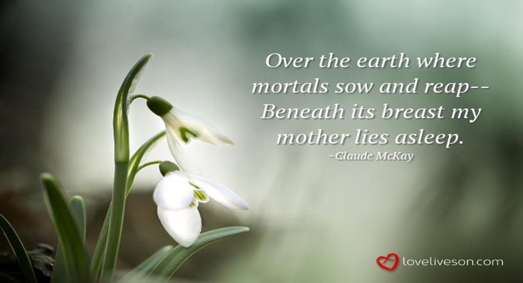 Funeral Poem for Mother Meme: My Mother