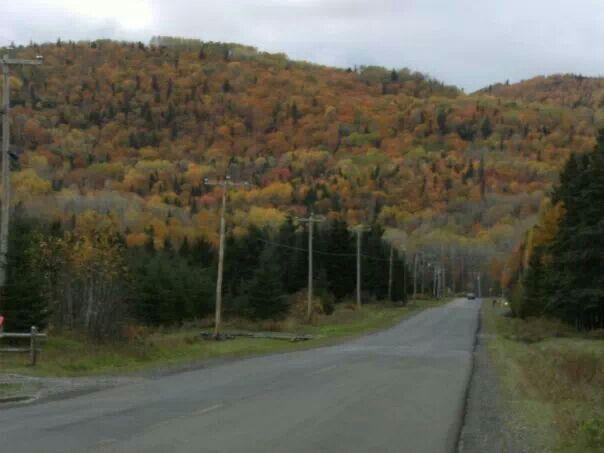 Fall foliage, St -Jules Cascapedia