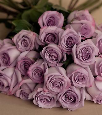 Lavender Roses!