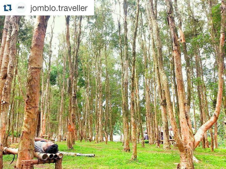 #Repost @jomblo.traveller with @repostapp  @jomblo.traveller from @ponkge -  Kamu pengen ngadem kesini aja pasti betah  tempatnya sejuk  nyaman gak bnyak orang  kamu bisa puas tiduran disini  #hutankayuputih #jogjalantaidua #explorebantul #jelajahbantul #dolanbantul #wonderful_places #wonderfuljogja #jogjamedia#jpmpjogja #jomblotraveller #jogjaku #explorejogja #jalanjalandijawa #jogjajateng #indoflashlight #indotravellersco #infosenijogja #berandajogja #detailjogja#jogjabanget…