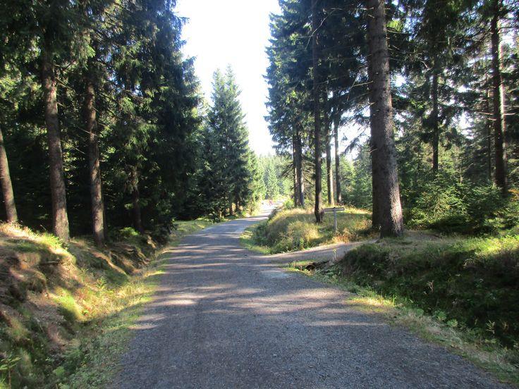 Les a cesta u Božího Daru - Krušné hory