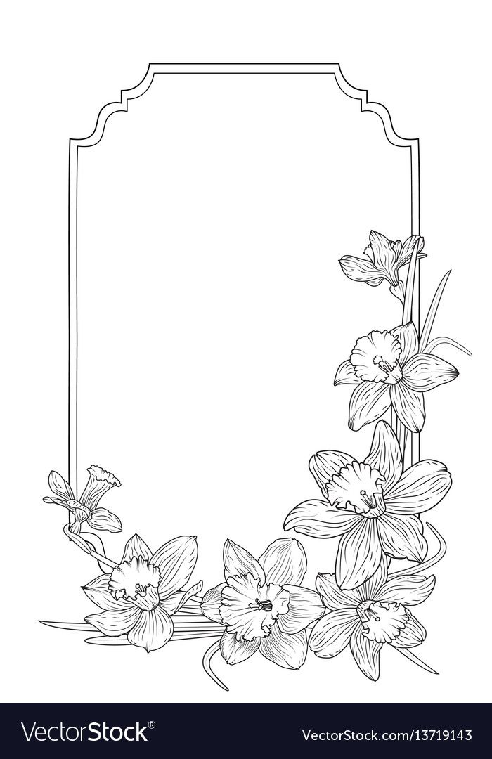 Narcissus Daffodils Spring Floral Border Frame Vector Image On