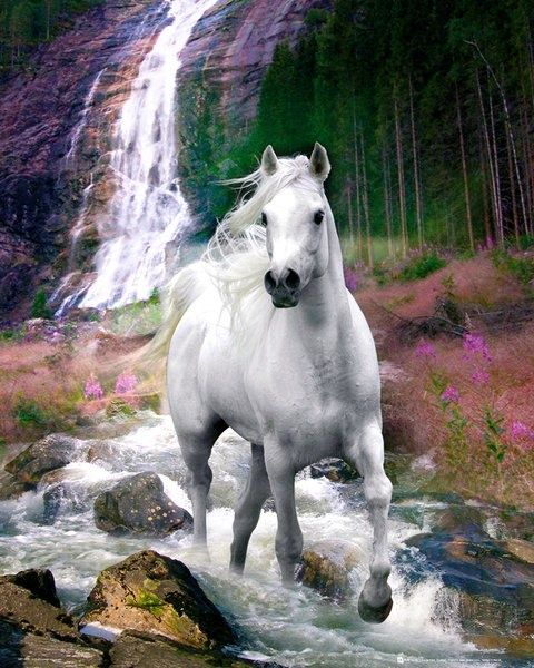 """""""Voglio una fabbrica piena di luce e di #bellezza, perché la bellezza rende migliori. E una fabbrica che produca cultura, perché la #cultura ci rende liberi"""" (A. Olivetti). #quotes #citazioni #cavalli #horses #white #fastrentmoney #noleggiooperativo www.fastrentmoney.com"""