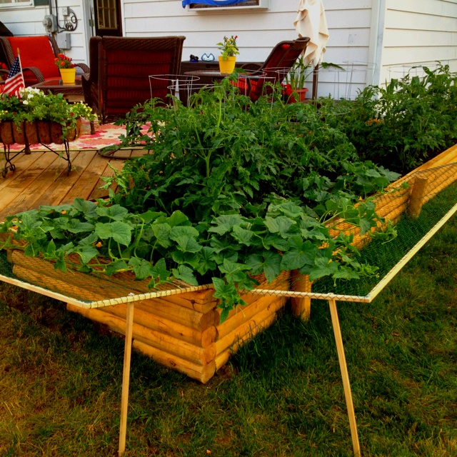 how to build an above ground vegetable garden