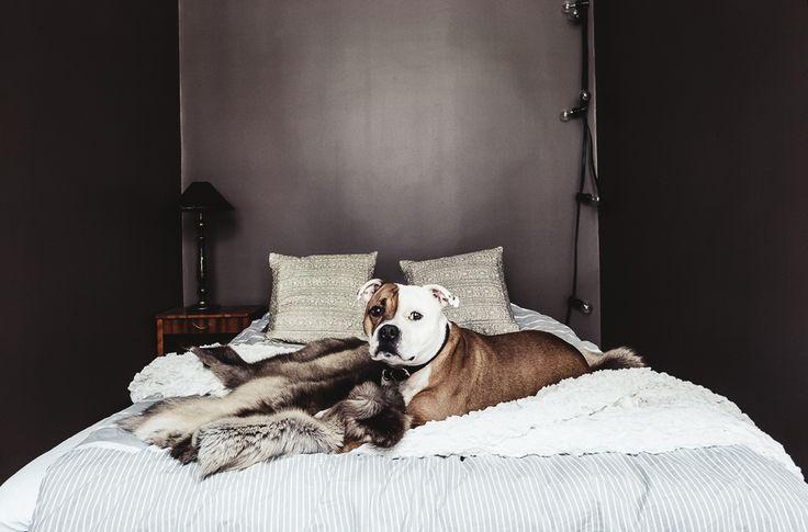 sypialnia, łóżko, wystrój wnętrz, architektura wnętrz, wystrój sypialni, aranżacja sypialni, szare ściany, modern bedroom, nowoczesna sypialnia, prosta sypialnia, minimalizm, pies, psy, czarne ściany, mała sypialnia