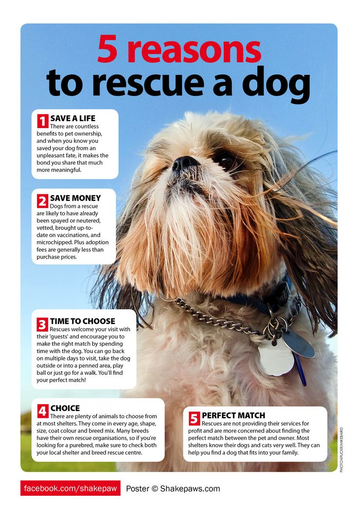 91 best Support dog rescue images on Pinterest Dog poster - pet poster
