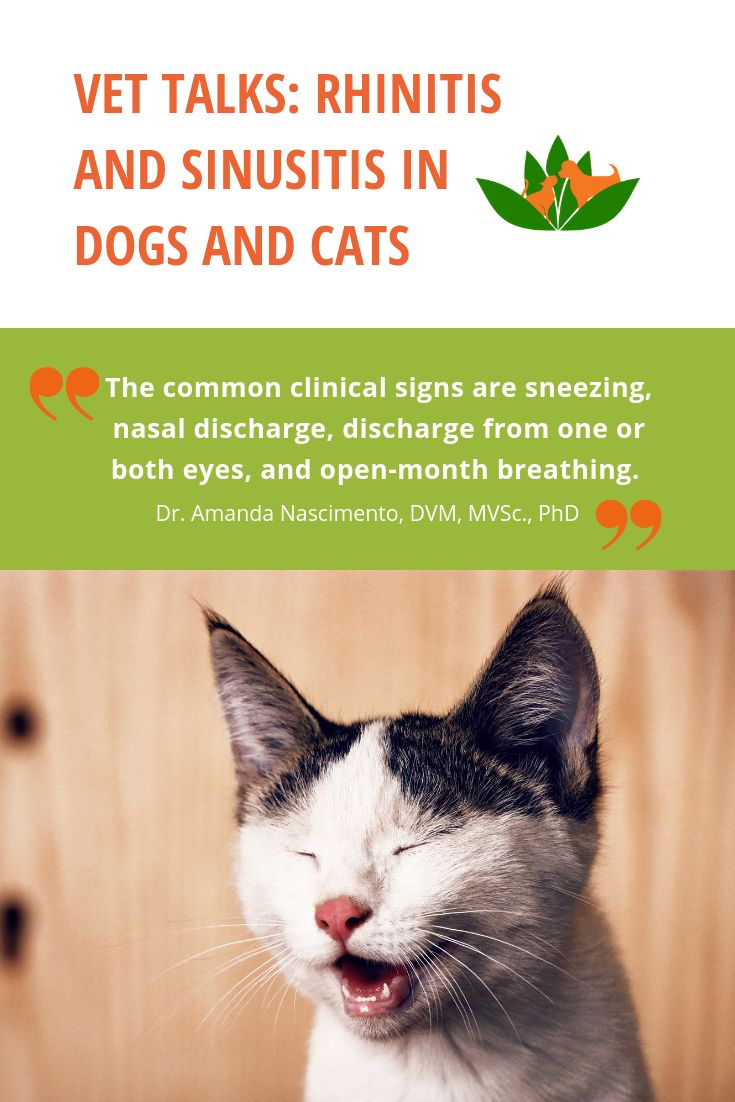Vet Talks Rhinitis And Sinusitis In Dogs And Cats Treatment For