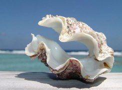 ...и опять, конечно же, о море и тайнах его Величия)))