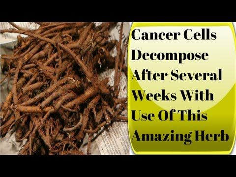 Cancer Cells Decompose After Several Weeks With Use Of This Amazing Herb - YouTube