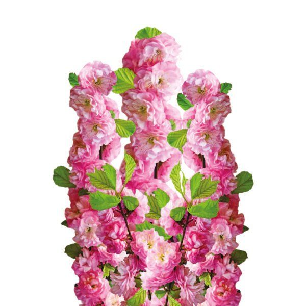 Migdałek trójklapowy (krzew) - Prunus triloba (shrub)